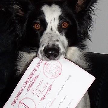 Yem diploma